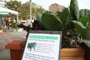 Grow Your Own Collards and Kale